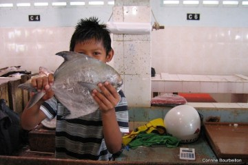 Au fish-market de Tawau (Bornéo, Malaisie, juillet 2009).