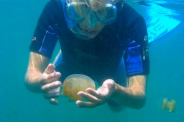 Kakaban Jellyfish