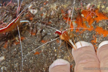 Une « shrimp manucure », ça vous dit ?