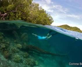 Blue water mangrove. Raja Ampat, Papouasie, Indonésie. Mars 2012.