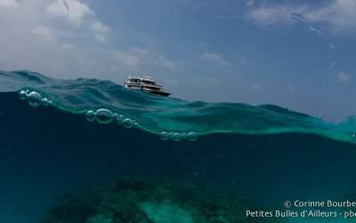 Ocean Divine. Maldives, février 2014.