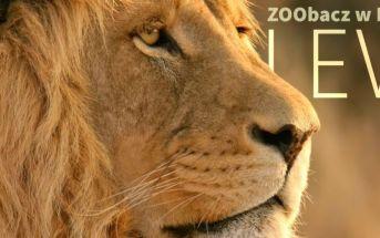 Lew_Zoo