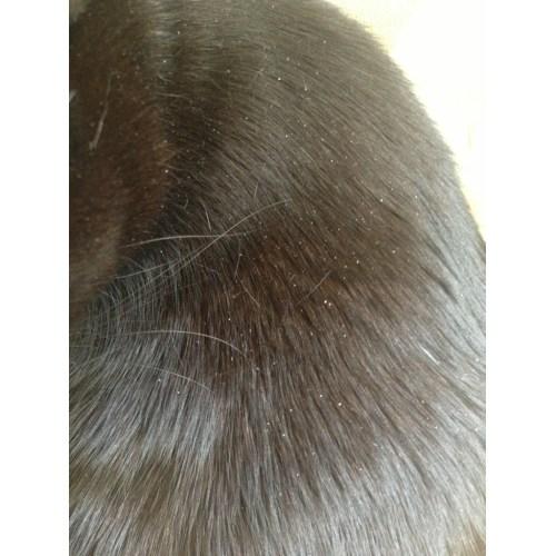 Medium Crop Of Cat Has Dandruff