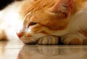 Spotting the Subtle Signs of Chronic Pain in Cats