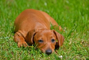 Managing Canine Stress Through the Diet