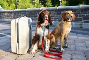 Putting Together an Emergency 72-Hour Kit For Your Dog