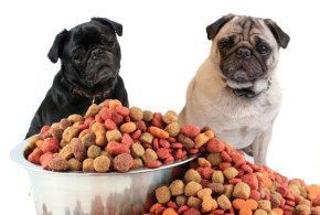 Effect of the Diet on Canine Aggression
