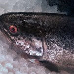 trout contains EPA and DHA for dogs