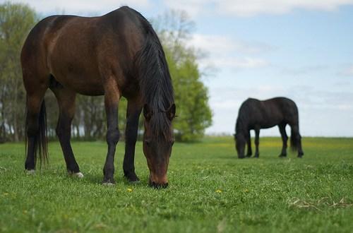 Milkweed Poisoning in Horses