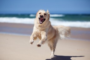 12 of the Best Supplements Proven to be Beneficial for your Dog