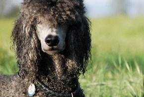Hot Spots on Dogs: Canine Acute Moist Dermatitis