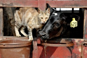 Confirmed Bovine Tuberculosis Transmission Between Pets and Owners