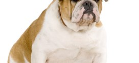 PFMA Pet Obesity Report 2014: A Nation of Fat Cats and Dogs