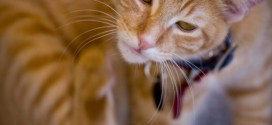 Bob Martin to Tackle Permethrin Poisoning in Cats