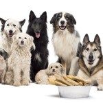 Dog Food, Supplies & Accessories