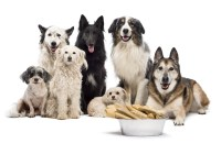 Pet source dog food supplies accessories solutioingenieria Image collections
