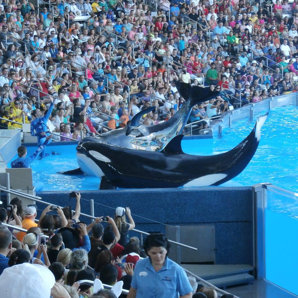 Sea World Orlando FL 2014