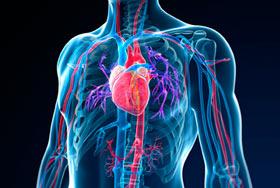 systeme sanguin