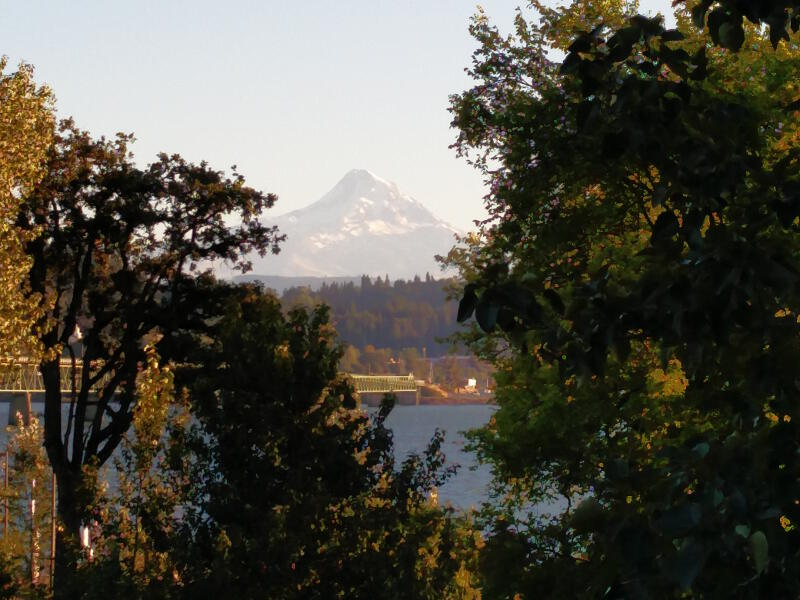 Mt Hood through the trees