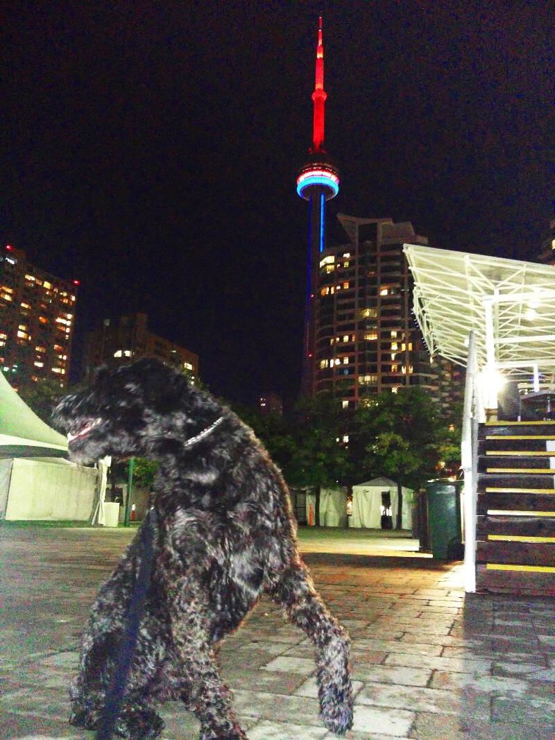 Smok showing his wild side in front of the CN Tower