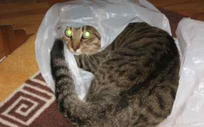 Letting The Cat Out Of The Bag