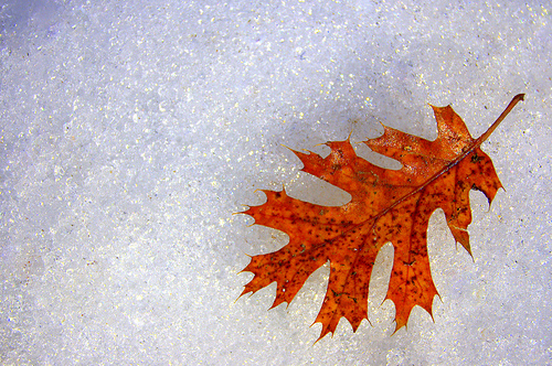 Even the Last Leaf of Fall knows that change has come, and gives itself to the First Snow of Winter.
