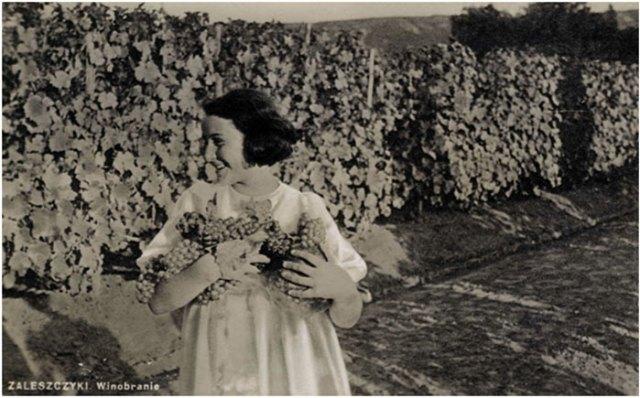 Вінобранє в Заліщиках, 1937 рік