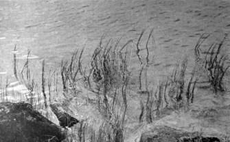 Анна Ортинська. Шуварі, 1930-ті рр. (Світло й Тінь. – 1936. – Ч. 6)