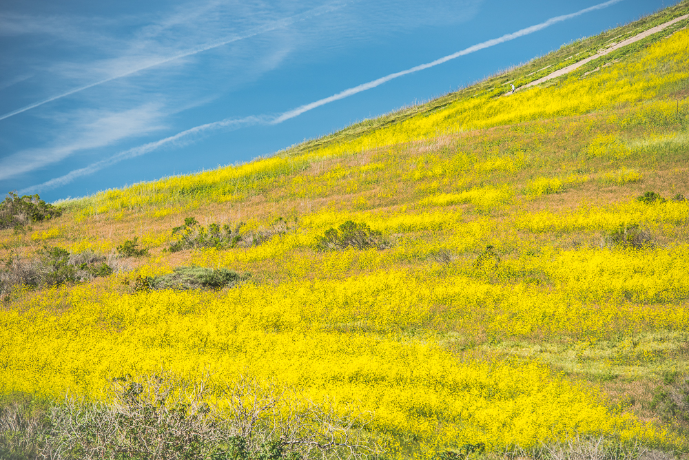 PCH_Day_2_0025_160315