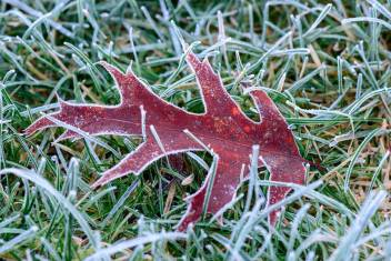 Nikon D800 Macro - Frosty Morning - Lawn