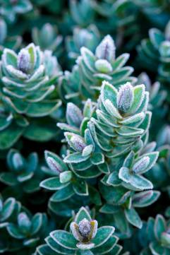 Nikon D800 Macro - Frosty Morning - Focus Stack Plant