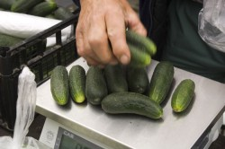 Small Of How Long Do Cucumbers Last