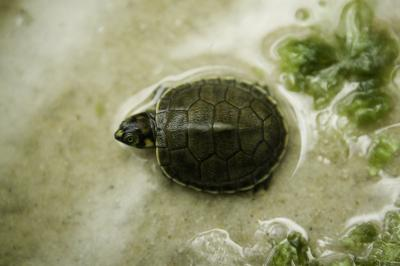 How to Get Rid of Turtle Tank Odors | Animals   mom.me