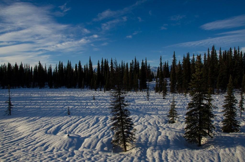 Snow-covered field near the Alaska Range