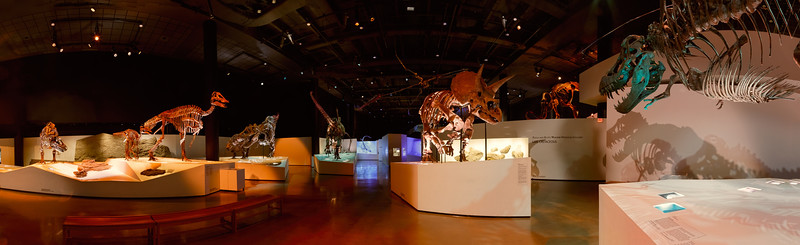 A pano of the Morian Hall of Paleontology at the Houston Museum of Natural Science. Photo by Tim Stanley