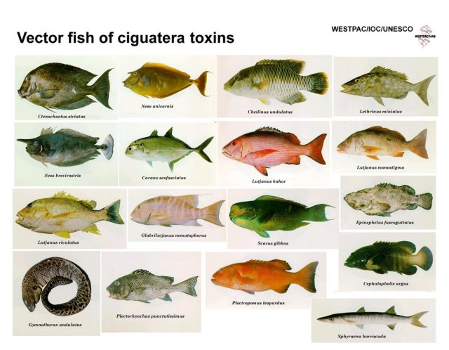 Saltwater fish you can eat poisonous fish that you for Poisonous fish to eat