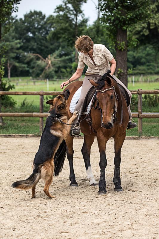 Pferde12