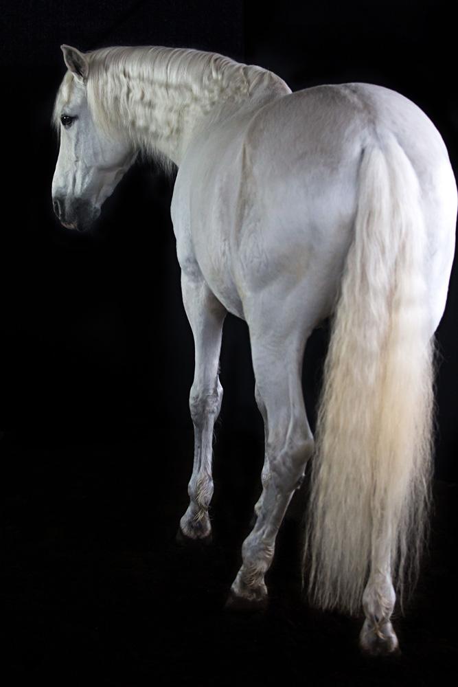Pferde34