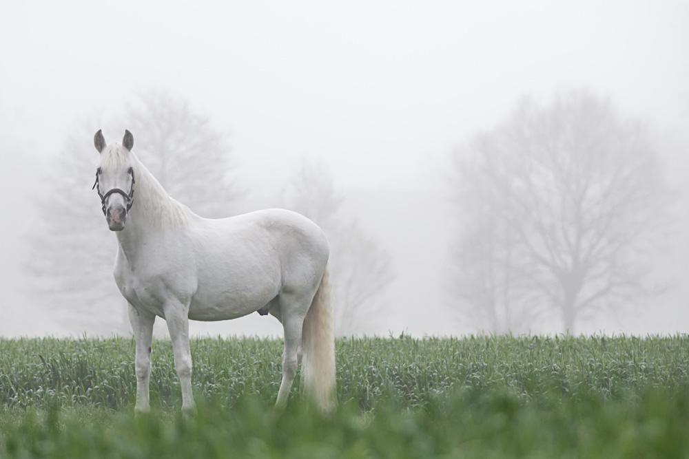 Pferde37