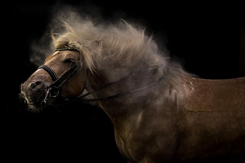 Pferde45
