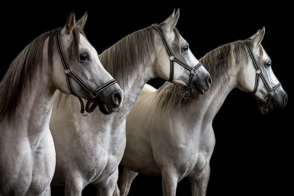 Pferdefotos