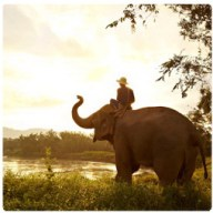 Elephant trekking Phuket 254-254