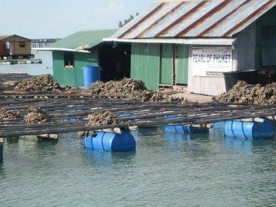 pearl farms in Phuket