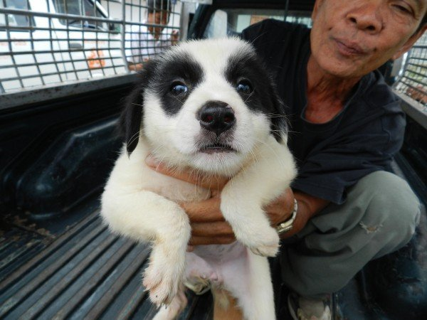 Soi Dog Foundation Expanding Operations To Rescue More Puppies.