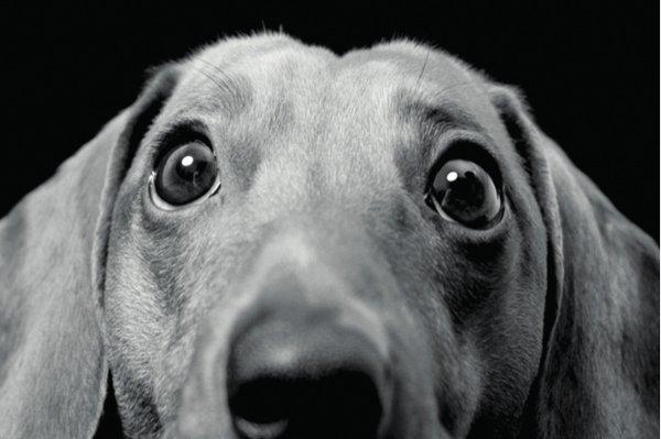 Soi Dog Fundraiser 12th May 2012