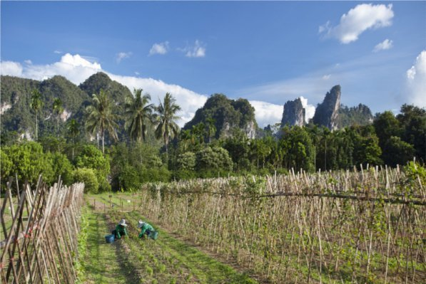 Discover Thailand's 'Emerald Forest' with Thanyamundra's Green Team