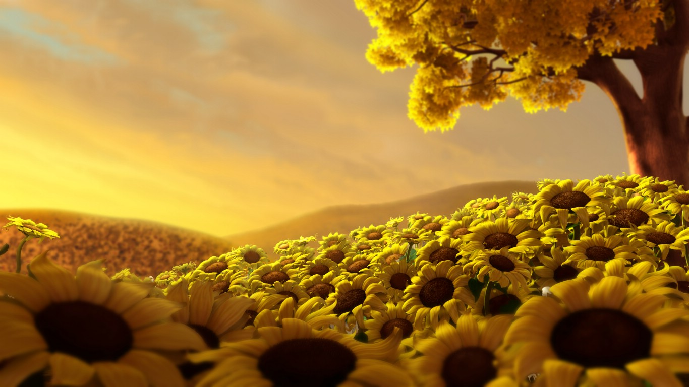 Sun and Flowers Wallpaper