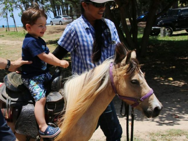 Review Turtle Bay Resort Oahu Pony Experience