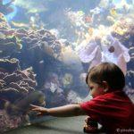 Our Visit to the Waikiki Aquarium