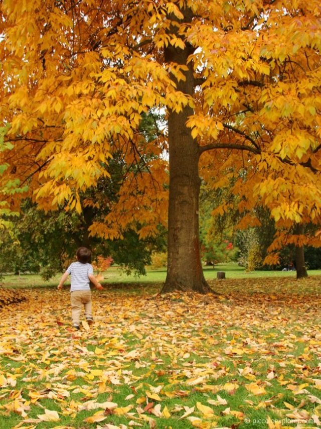 Autumn Kew Gardens London